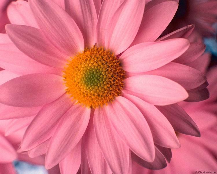 Красивые розовые картинки на заставку и обои - подборка 11