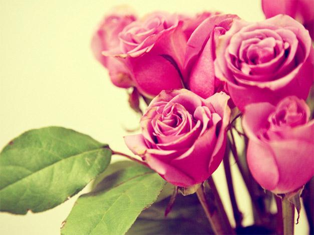 Красивые розовые картинки на заставку и обои - подборка 16