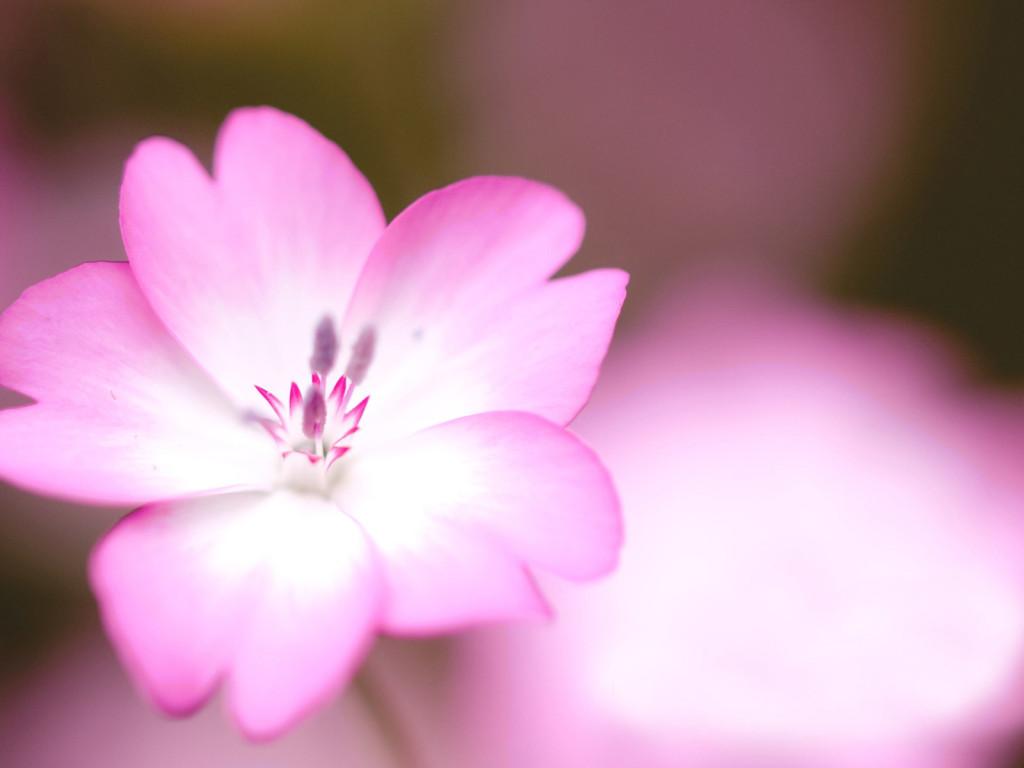 Красивые розовые картинки на заставку и обои - подборка 2