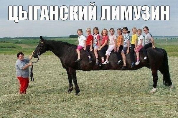 Лучшие смешные и веселые картинки, фото с текстом - сборка №99 4