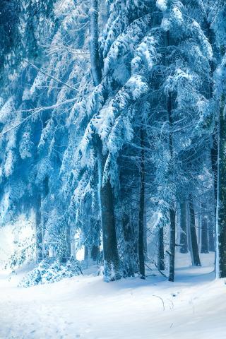 Обои и картинки про зиму на заставку телефона - самые красивые 12