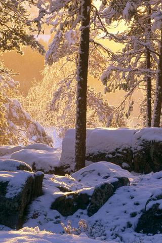 Обои и картинки про зиму на заставку телефона - самые красивые 16