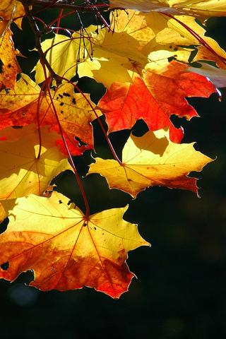 Осенние листья картинки на телефон - самые красивые и прикольные 12
