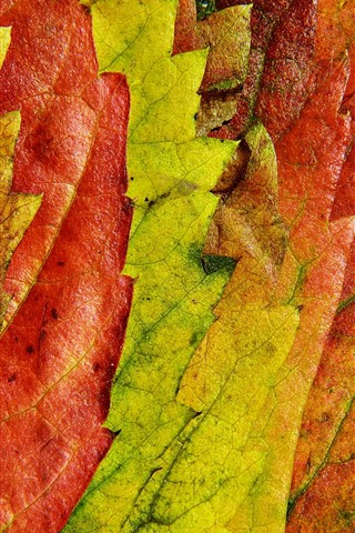 Осенние листья картинки на телефон - самые красивые и прикольные 13