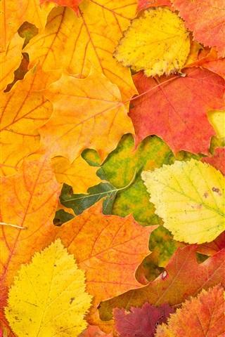 Осенние листья картинки на телефон - самые красивые и прикольные 17
