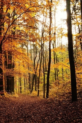 Осенние листья картинки на телефон - самые красивые и прикольные 18