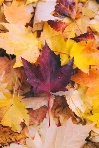 Осенние листья картинки на телефон - самые красивые и прикольные 19