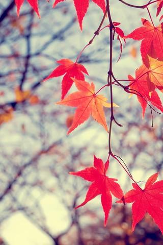 Осенние листья картинки на телефон - самые красивые и прикольные 20