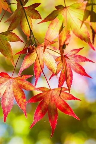 Осенние листья картинки на телефон - самые красивые и прикольные 22