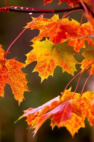 Осенние листья картинки на телефон - самые красивые и прикольные 4