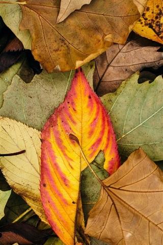 Осенние листья картинки на телефон - самые красивые и прикольные 5