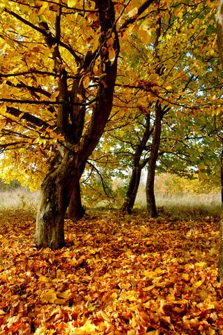 Осенние листья картинки на телефон - самые красивые и прикольные 8