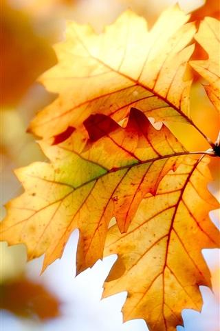 Осенние листья картинки на телефон - самые красивые и прикольные 9