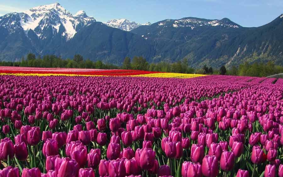 Поле цветов картинки и фотографии - самые красивые и удивительные 1