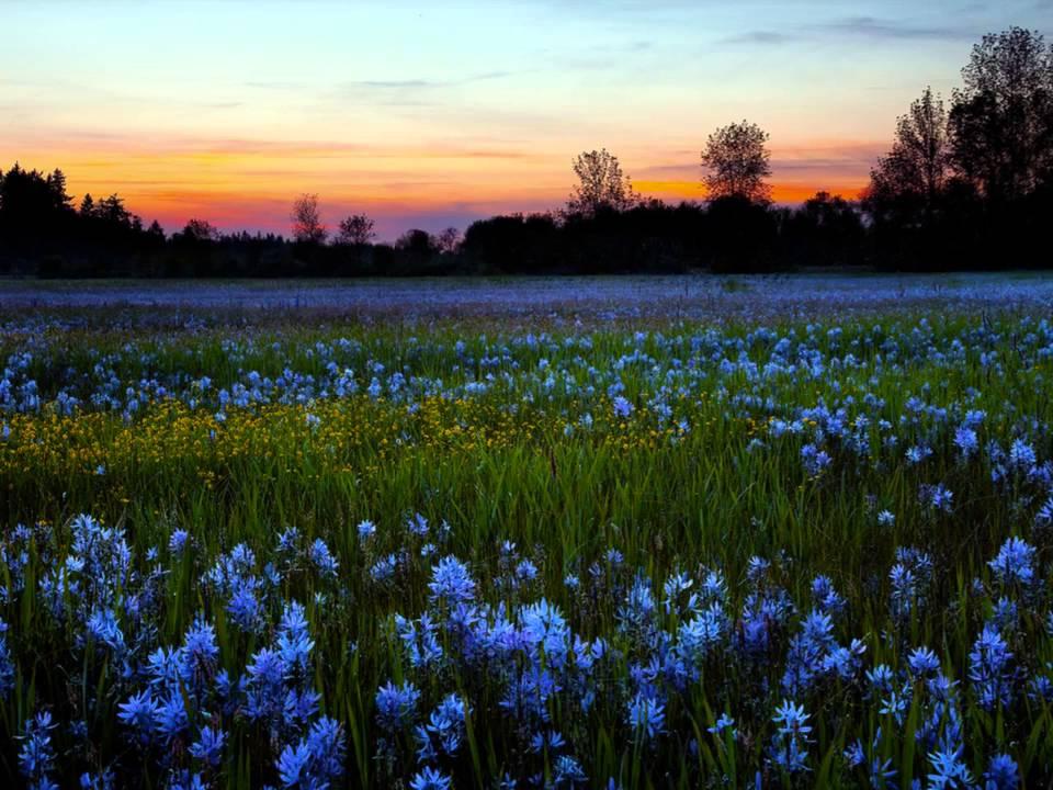 Поле цветов картинки и фотографии - самые красивые и удивительные 10
