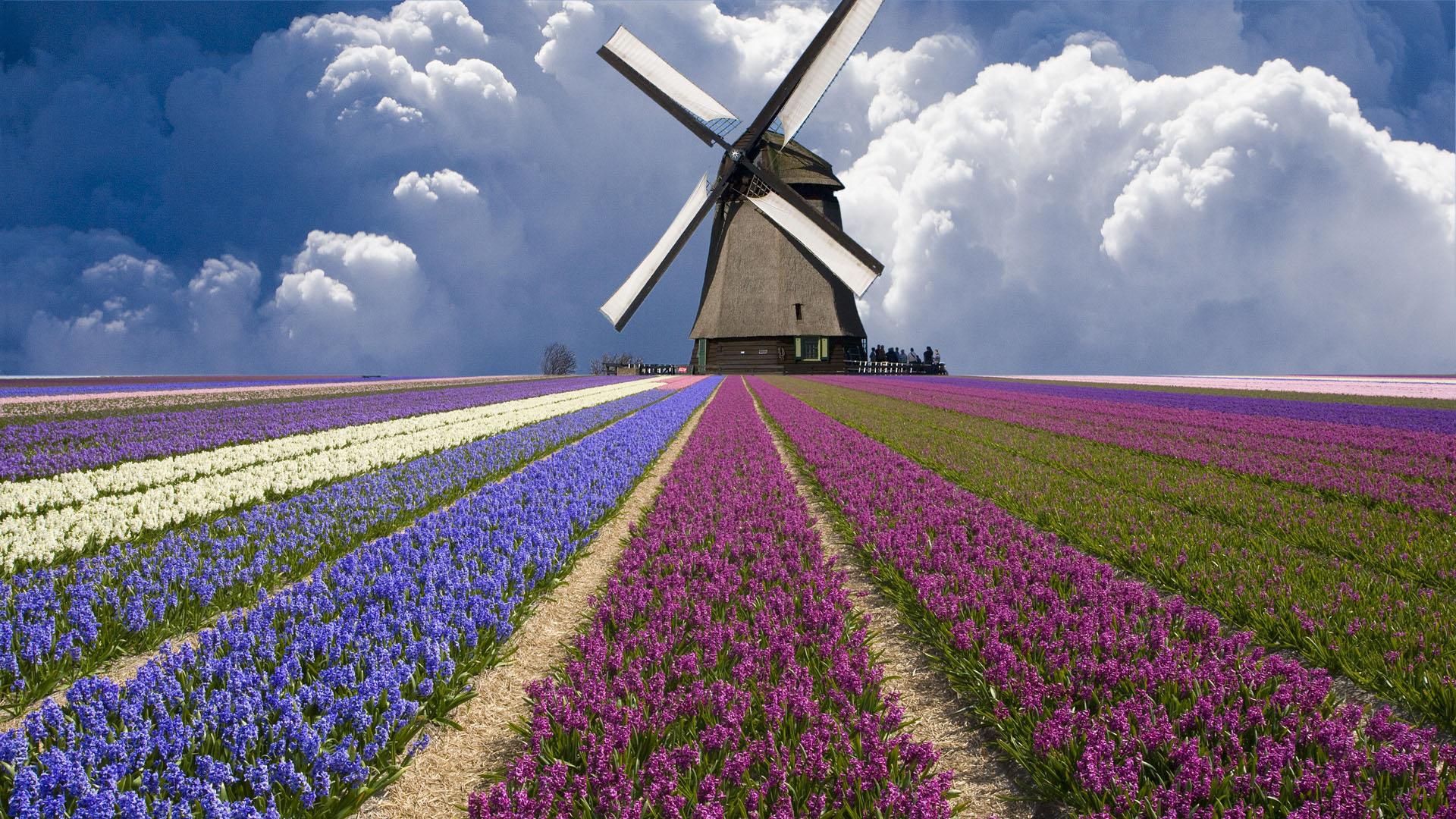Поле цветов картинки и фотографии - самые красивые и удивительные 12