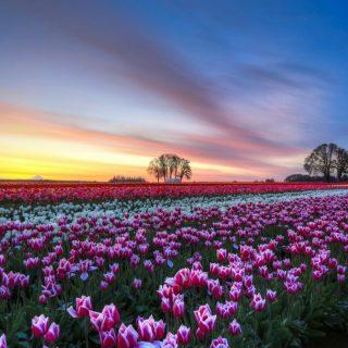 Поле цветов картинки и фотографии - самые красивые и удивительные 15