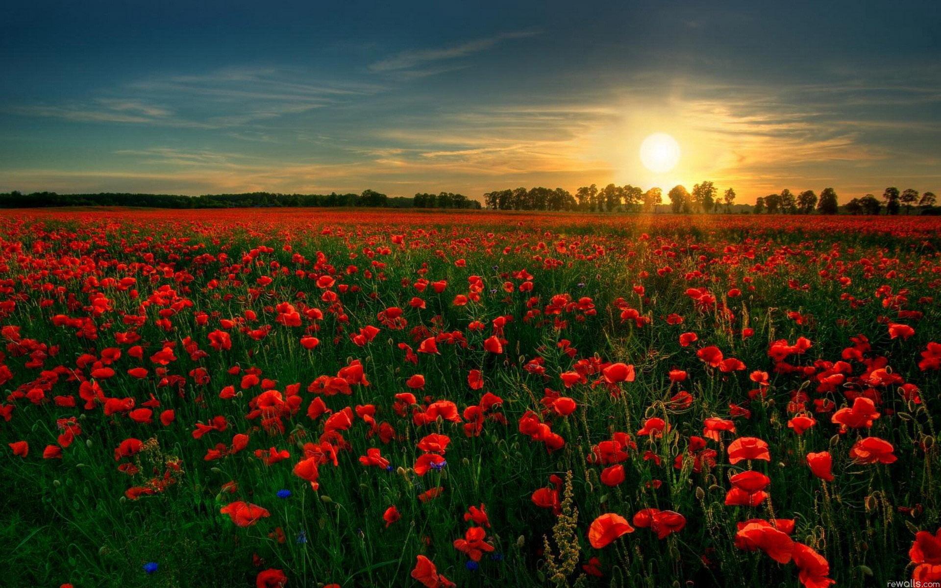 Поле цветов картинки и фотографии - самые красивые и удивительные 5