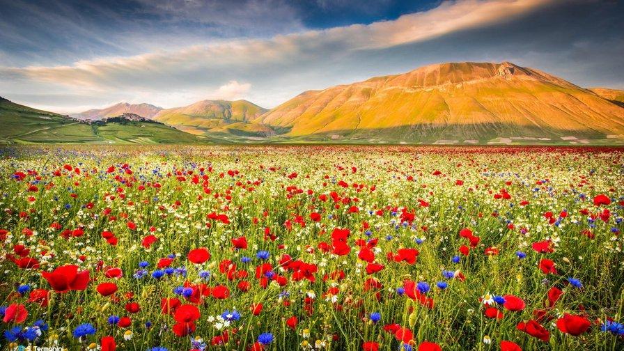 Поле цветов картинки и фотографии - самые красивые и удивительные 7