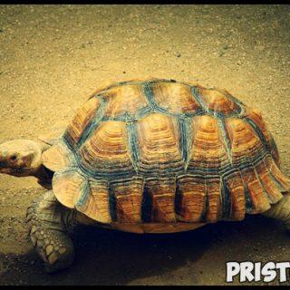 Правила содержания морской черепахи. Как ухаживать за морской черепахой 2