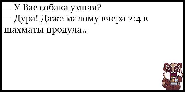 Смешные анекдоты про животных и питомцев до слез - подборка №128 4