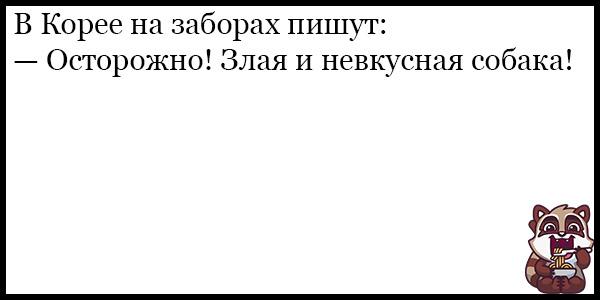 Смешные анекдоты про животных и питомцев до слез - подборка №128 8