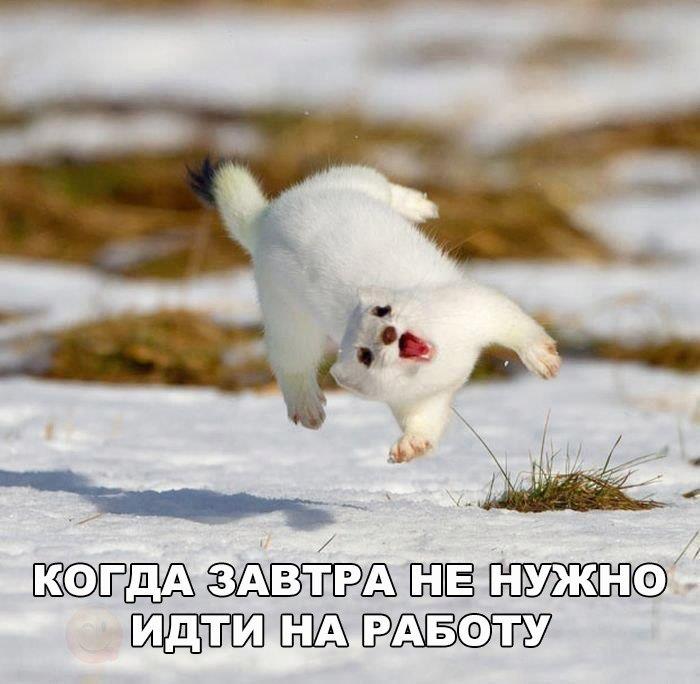 Смешные и забавные картинки про зиму и снег - подборка 13