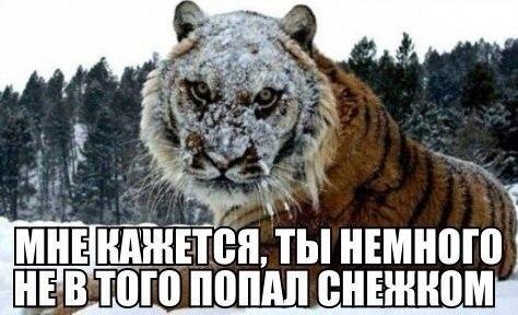 Смешные и забавные картинки про зиму и снег - подборка 2