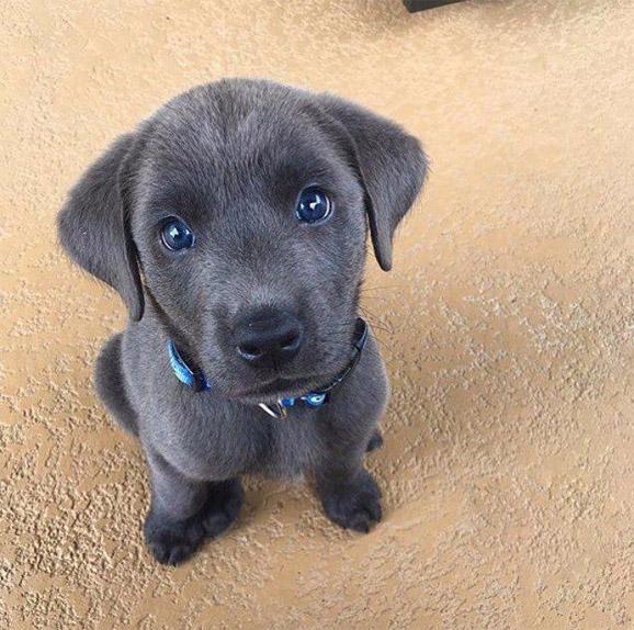 Щенки и собаки с красивыми глазами - удивительные фотографии 1