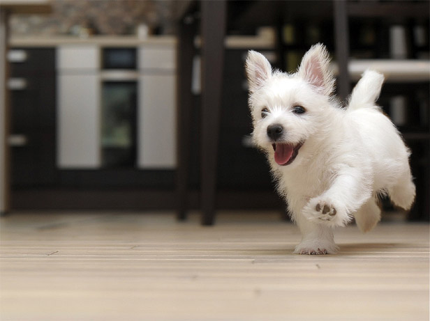 Щенки и собаки с красивыми глазами - удивительные фотографии 10