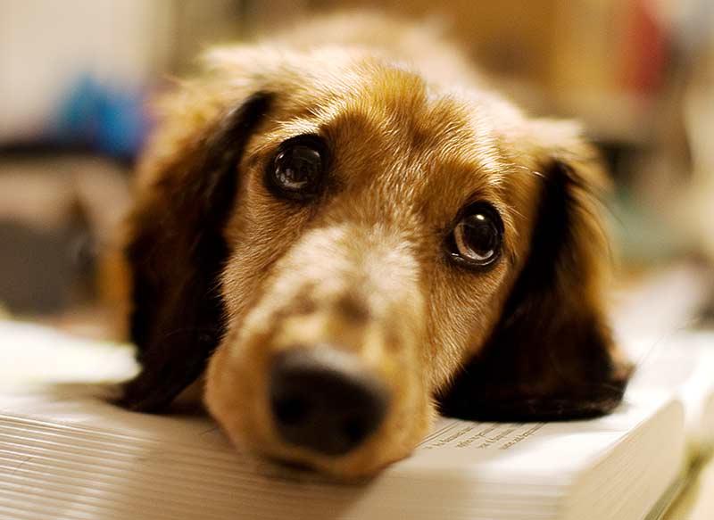 Щенки и собаки с красивыми глазами - удивительные фотографии 12