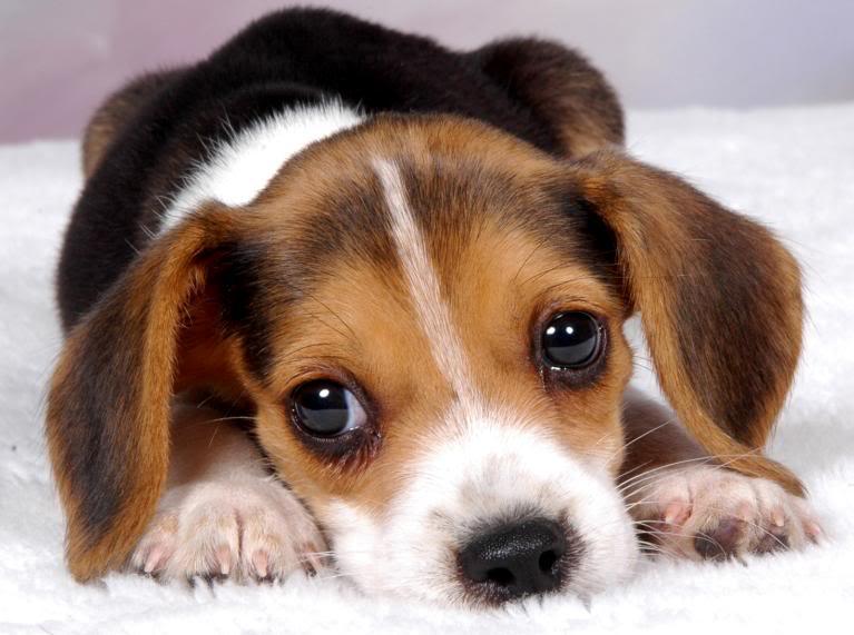 Щенки и собаки с красивыми глазами - удивительные фотографии 4
