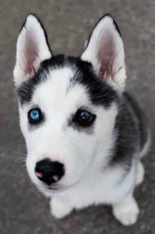 Щенки и собаки с красивыми глазами - удивительные фотографии 5
