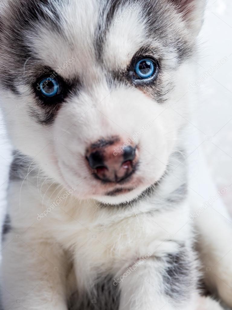 Щенки и собаки с красивыми глазами - удивительные фотографии 6