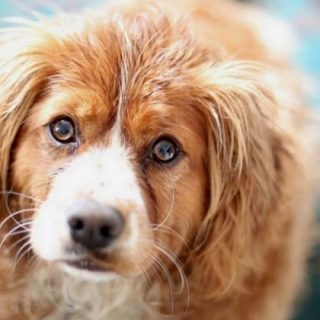 Щенки и собаки с красивыми глазами - удивительные фотографии 8