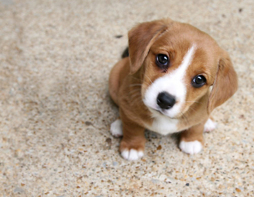 Щенки и собаки с красивыми глазами - удивительные фотографии 9