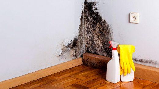 Как вывести плесень в доме - простые и эффективные методы 2