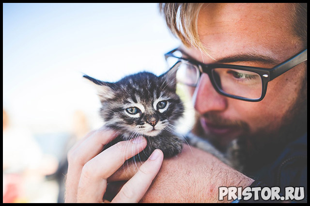 Как успокоить маленького и активного котенка - основные советы 1