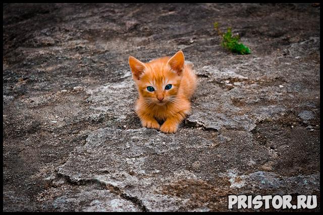 Как успокоить маленького и активного котенка - основные советы 2