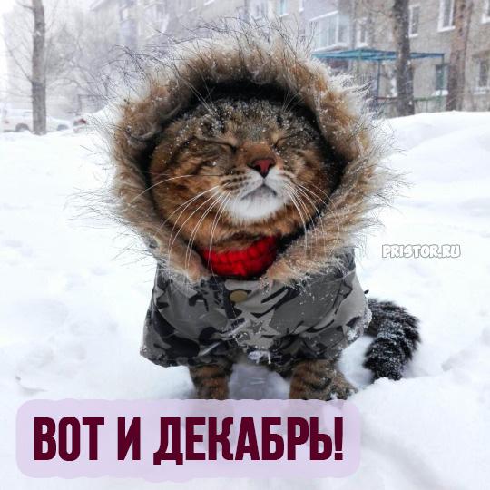Картинки Вот и декабрь!, Зима пришла - самые прикольные 7