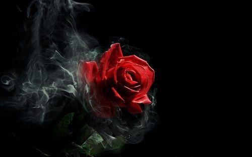 Картинки и фотки на аву розы красивые - подборка аватарок 2