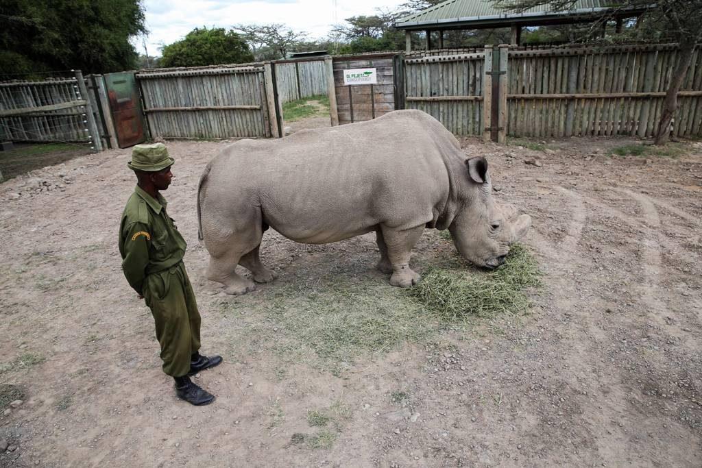 Красивые и прикольные картинки белого носорога - подборка 1