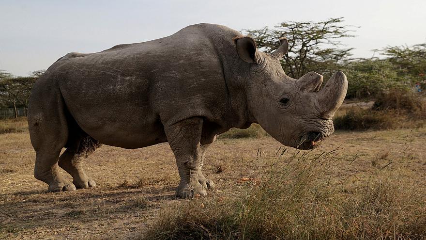 Красивые и прикольные картинки белого носорога - подборка 4