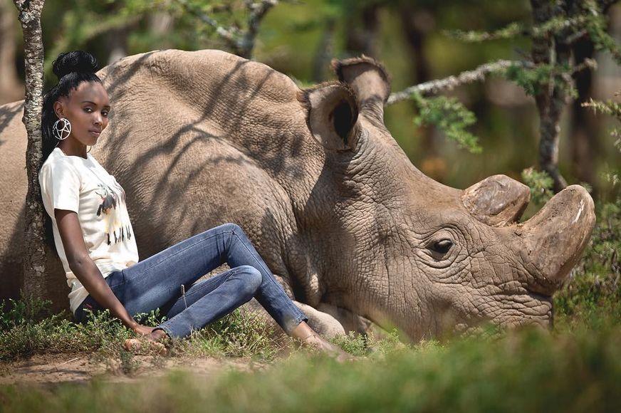 Красивые и прикольные картинки белого носорога - подборка 5
