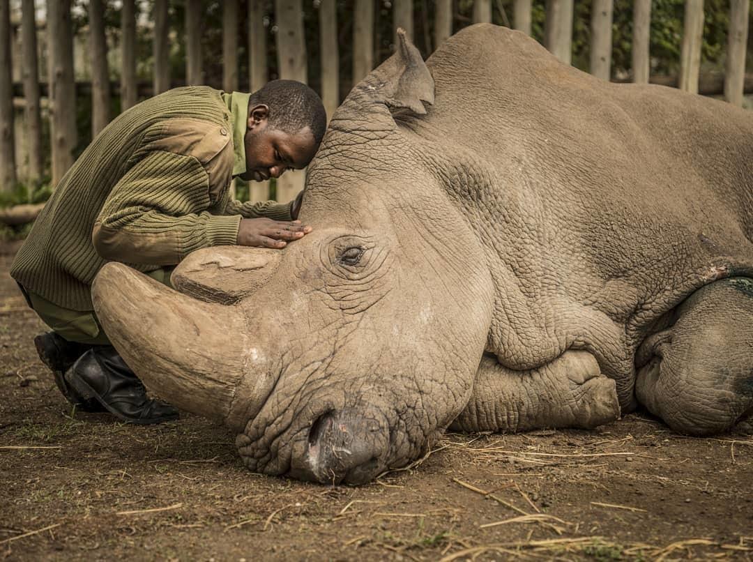 Красивые и прикольные картинки белого носорога - подборка 9