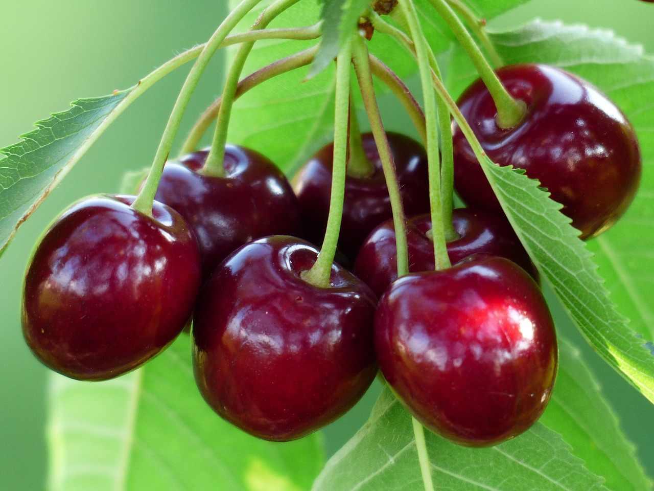 Красивые и прикольные картинки вишни - подборка изображений 16
