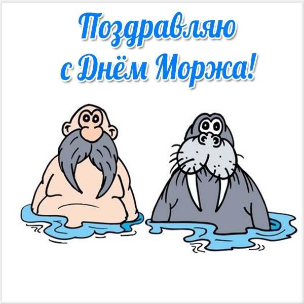 Красивые картинки и открытки с Днем Моржа - приятные поздравления 6