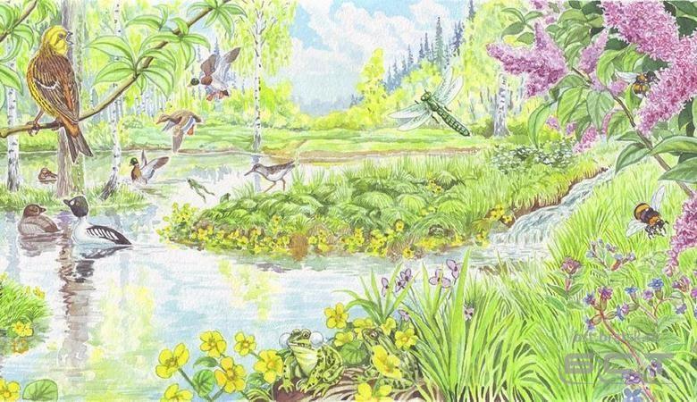 Красивые картинки на тему Звучащая природа - подборка 16