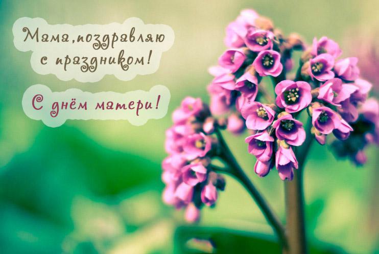 Красивые картинки, открытки с Днем Матери - приятные поздравления 6