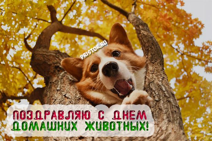 Красивые картинки с Днем Домашних Животных - подборка 10
